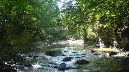 Озеро Кумиси - замечательное место для отдыха и рыбалки