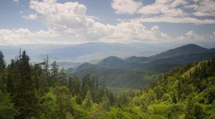 Borjomi mountains