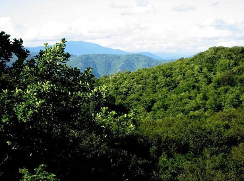 Уникальный и невероятно красивый заповедник Сатаплия в Грузии