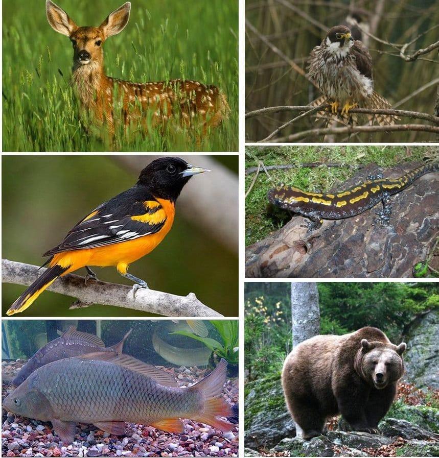 Национальный парк Кинтриши - «музей под открытым небом»