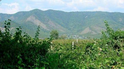 Путешествие в Алазанскую долину – сердце Кахетии
