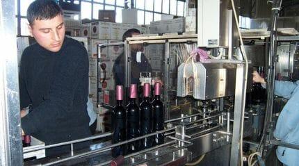 Корпорация Киндзмараули: завод, виноградники, винные магазины и еще много интересного