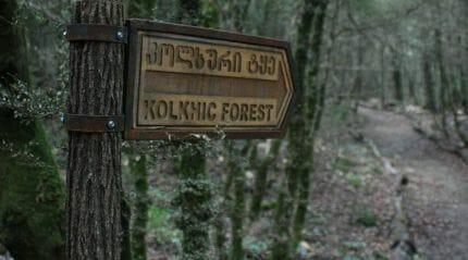 Колхидский государственный заповедник