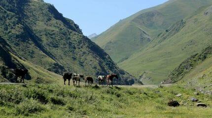 Охраняемые территории Грузии посетило рекордное число гостей