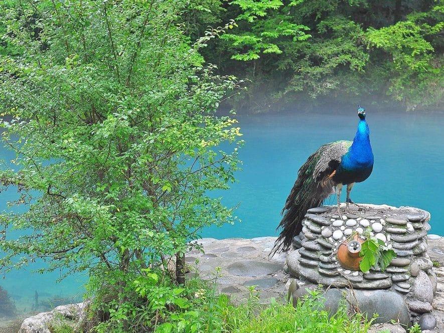 Голубое озеро - «драгоценность» Абхазии