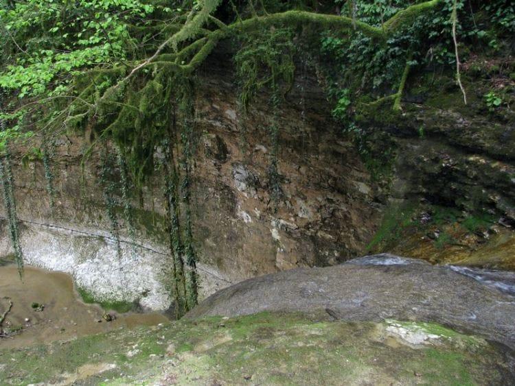rastitelnost Shakuranskogo vodopada