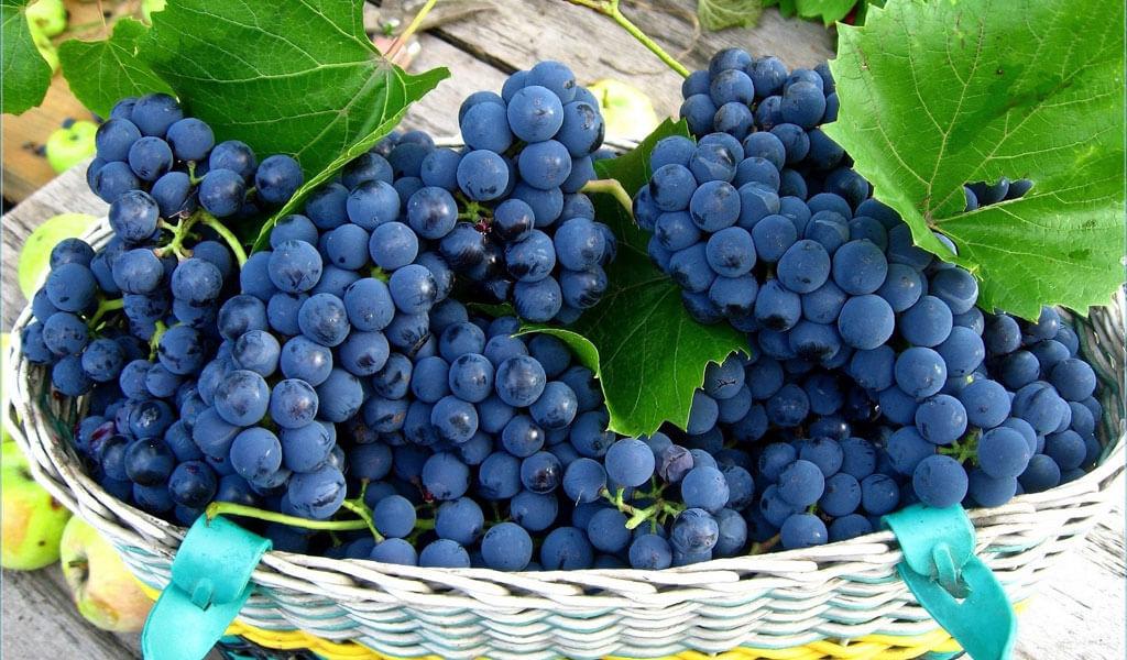 Винодельня Хареба - один из крупнейших производителей грузинского вина