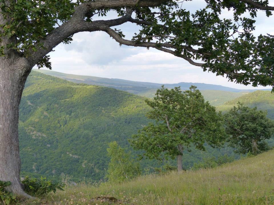 Национальный парк Алгети - живописный горный заповедник
