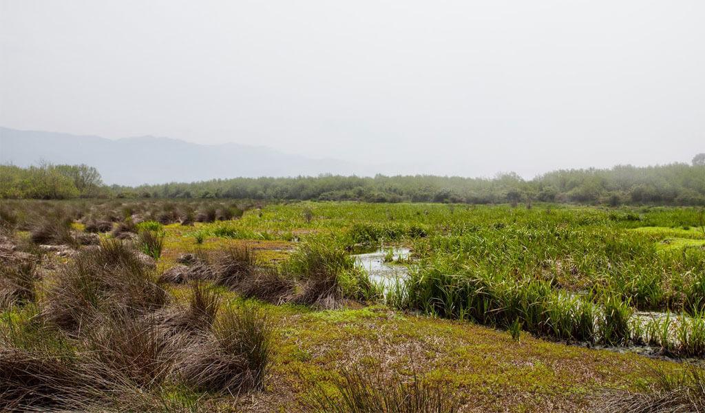 Кобулетский заповедник Испани - уникальные софгановые болота Аджарии