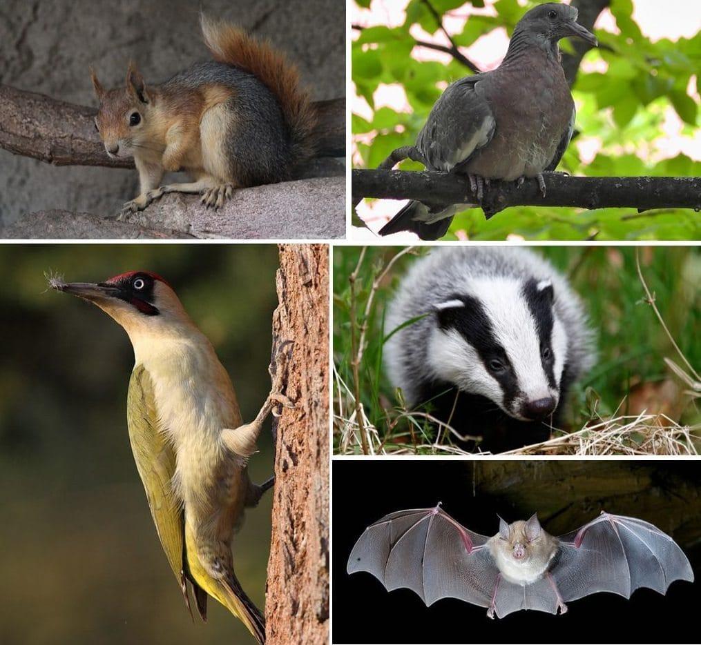 Мариамджварский заповедник - прекрасный памятник природы