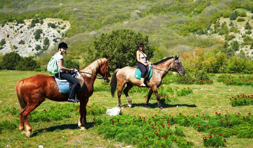 Прогулки на лошадях Тбилиси