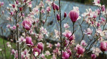 Ботанический сад Батуми - райский уголок для любителей природы
