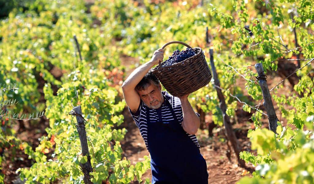 Ртвели - праздник сбора винограда в Грузии