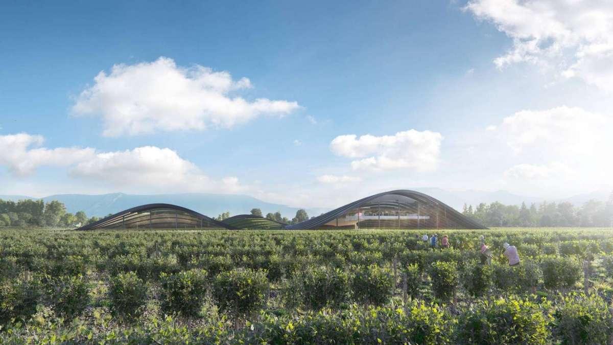 Euronews назвал винодельню в Кахетии лучшим объектом зеленой архитектуры